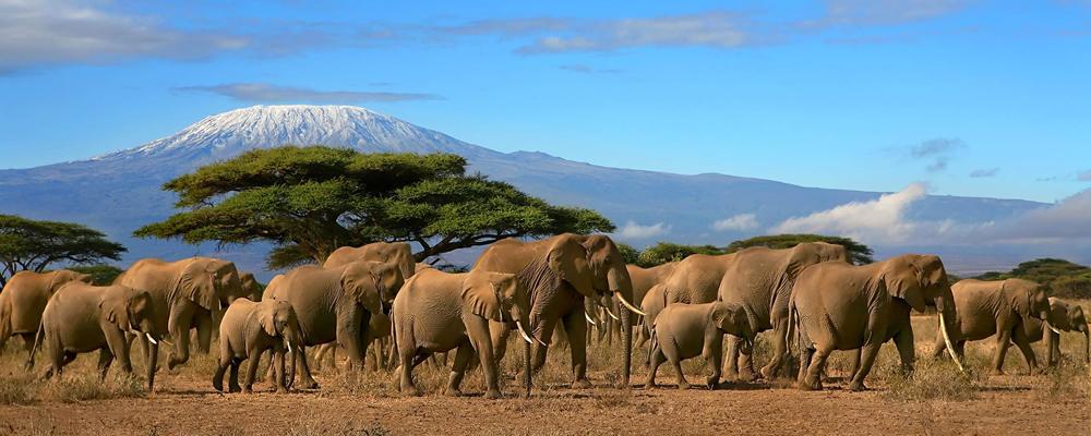 mt_kilimanjaro05