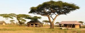 Accommodation Tanzania Safaris (17)